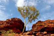 Kings Canyon, Outbac
